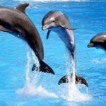 Rząd Indii przyznał delfinom osobowość